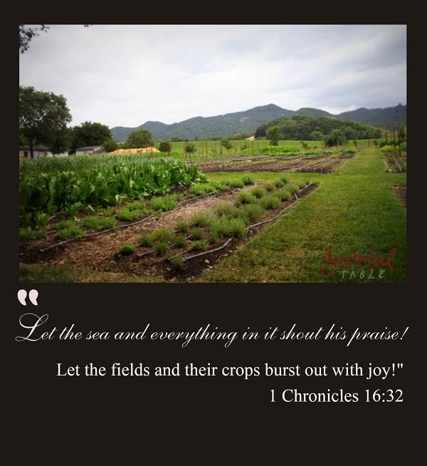 Fields-Crops-Shout-Joy-PINTEREST