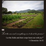 Fields-Crops-Shout-Joy-PINTEREST