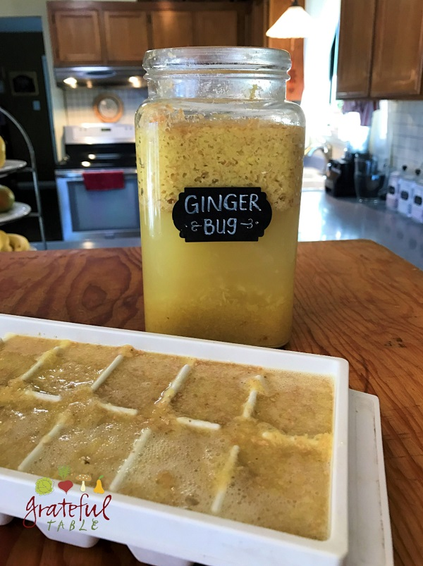Freeze Ginger Bug Paste!