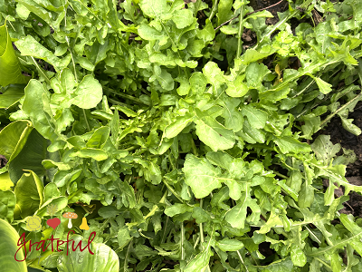 Arugula & Other Garden Greens for Health